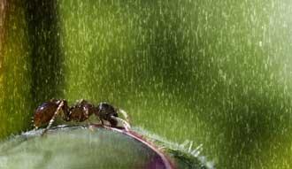 رابطه تنگاتنگ بین نزول باران و معنویت
